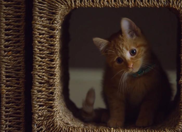 buzzfeed-friskies-dear-kitten-super-bowl